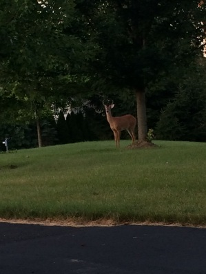 Things you get to see at 6:00 am.m running.